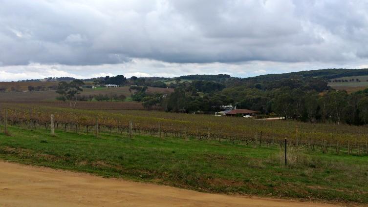 Barossa Fields